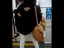 Японские мамы также как русские носят своих детей... Массаж на дому 09.06.2017