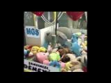 Живой кот в автомате игрушек