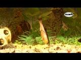 Плавающая резина IZUMI UMAMI в аквариуме