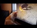 Кошачья совесть. 2 ч.