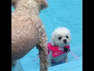 Маленькая собачка учится плавать