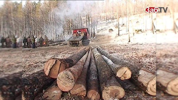 2 млн. гектара леса отдадут китайцам