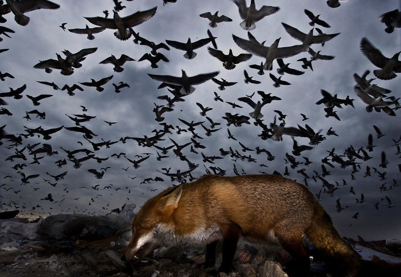 luPWxaVXowo - Фотографии птиц: победители Bird Photographer of the Year 2017