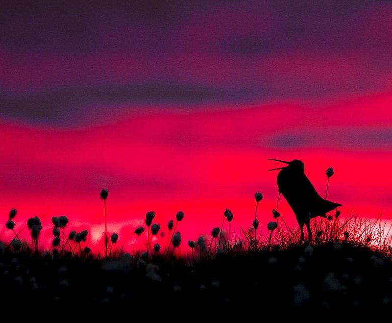 pUc4mU 68Xw - Фотографии птиц: победители Bird Photographer of the Year 2017