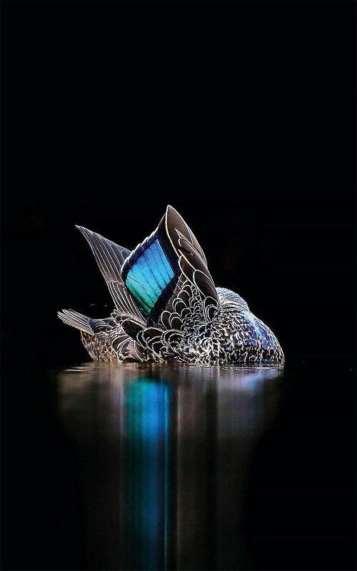 9b506 467UY - Фотографии птиц: победители Bird Photographer of the Year 2017