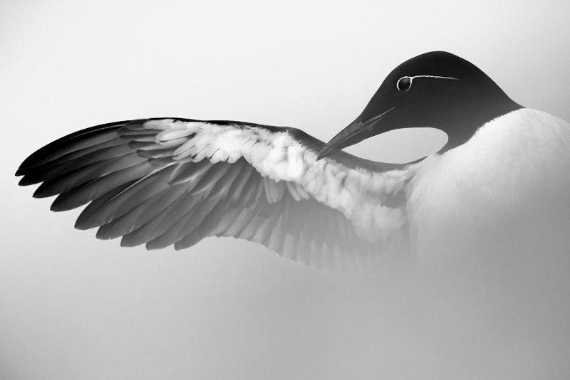 Фотографии птиц: победители Bird Photographer of the Year 2017