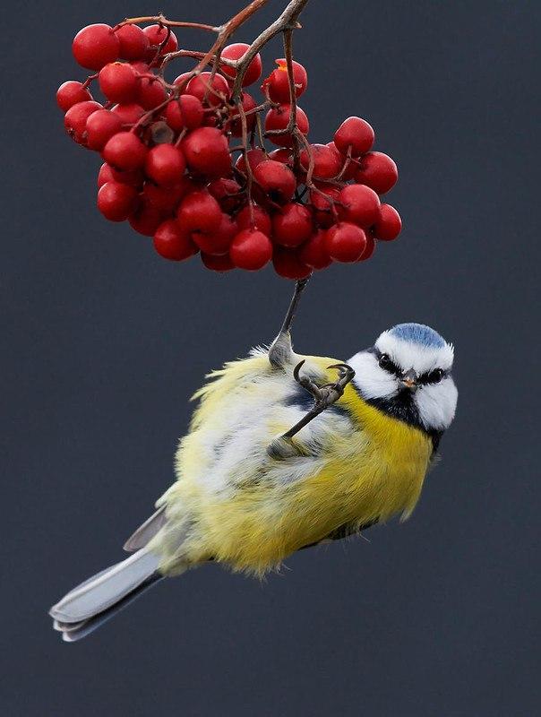 3DtZ BvmDrQ - Фотографии птиц: победители Bird Photographer of the Year 2017