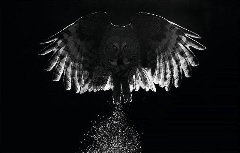 ywiaFobMsq0 - Фотографии птиц: победители Bird Photographer of the Year 2017