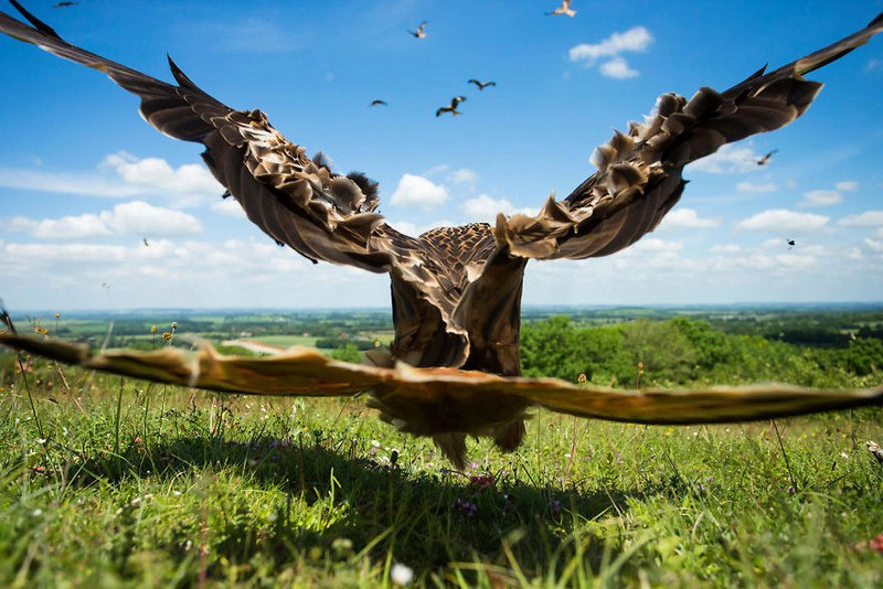 T 59MsoSwB4 - Фотографии птиц: победители Bird Photographer of the Year 2017