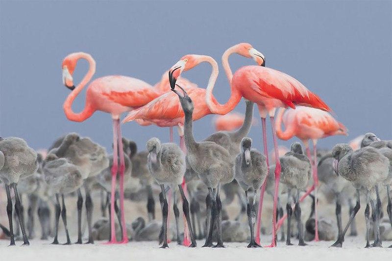 4j T7LVOleg - Фотографии птиц: победители Bird Photographer of the Year 2017