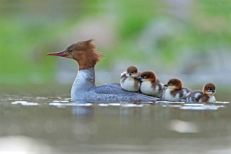 DGgP9SQvWtM - Фотографии птиц: победители Bird Photographer of the Year 2017