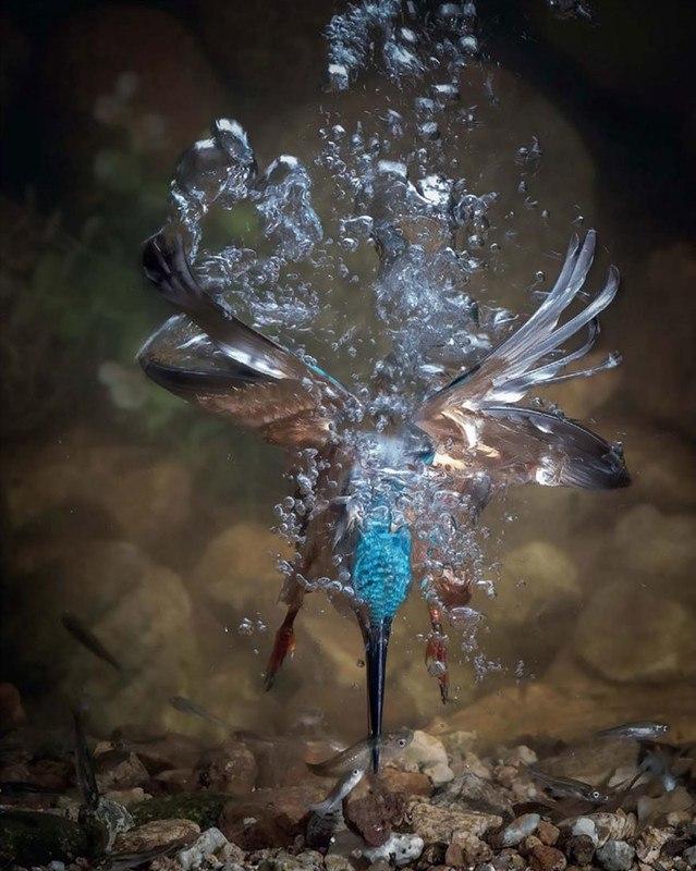 hWXu6yMnbMM - Фотографии птиц: победители Bird Photographer of the Year 2017