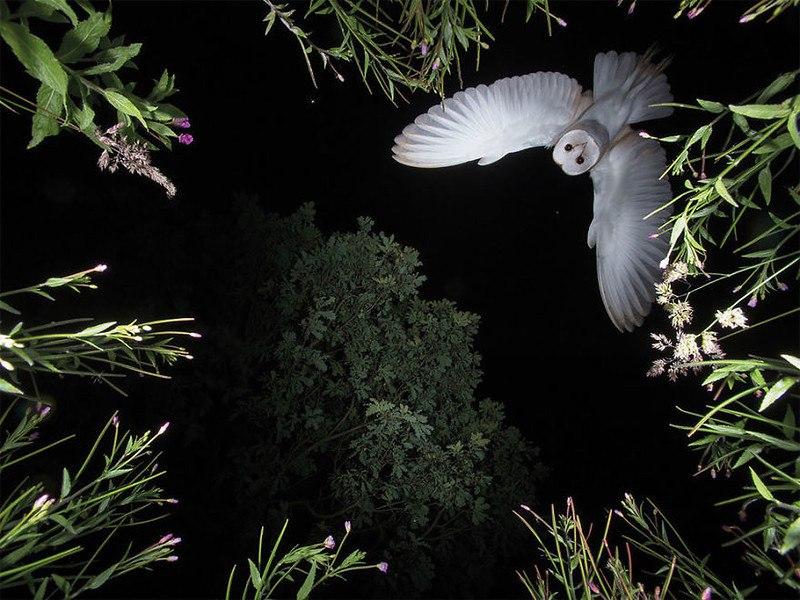 1I5Wxn0zA5w - Фотографии птиц: победители Bird Photographer of the Year 2017
