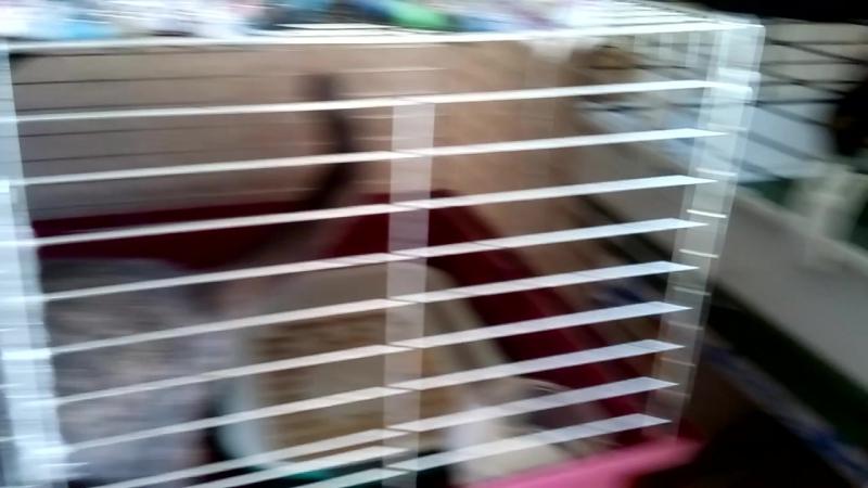 часть 2. Наш приют. Кто уж попал в кадр из моих котеек. 17 авг. 17г.Собани отделЬно.