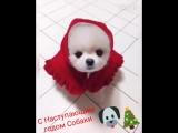 С наступающим Новым Годом собаки))))