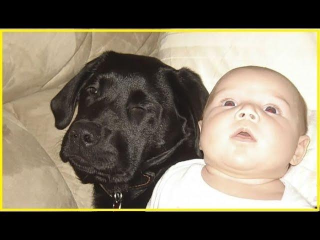 Не заводи собаку у тебя же маленький ребёнок говорили ей Но женщина никого не послушала…