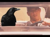 Crow Walker (fast and furious 7 + crow flying outside car) Curly Tales