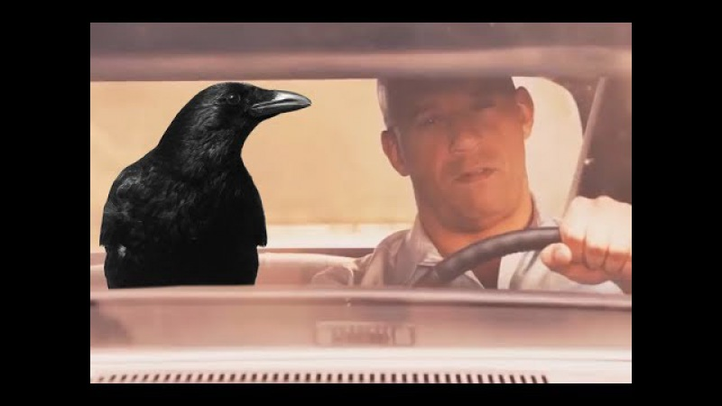 Crow Walker (fast and furious 7 crow flying outside car) Curly Tales