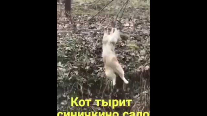 Кот-акробат и ворованное сало