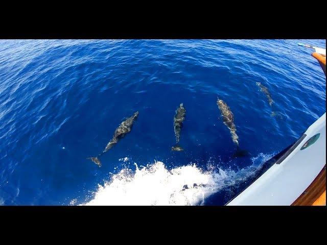 Дельфины, Майорка Delfines, Mallorca