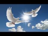 Вероника Круглова Прощайте, голуби Veronica Kruglov, Farewell, doves
