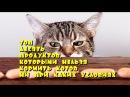 Топ десять продуктов которыми нельзя кормить котов ни при каких условиях