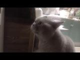 Кот просит открыть ему дверь и говорит: