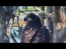 Smola Norway Eagle Cam ~ Solo's Tribute ~ One Moment In Time 2.21.18