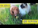 Русское видео про животных Приколы про собак новые видео смешное про собак и про...