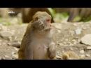 Дикая природа Китая Серия 2 Nat Geo Wild HD