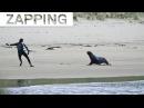 Des OTARIES attaquent des Surfeurs Drone Snowboard, Windsurf au Maroc