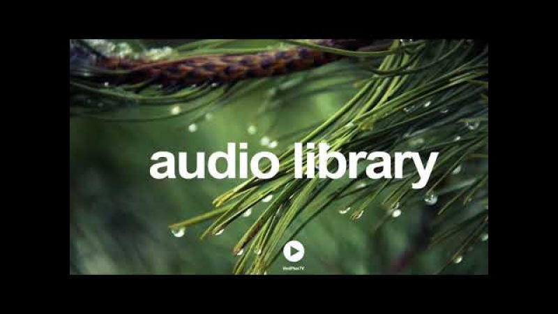 Lil Cookie - William Rosati | No Copyright Music YouTube - Free Audio Library