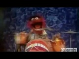 Animal Muppet   Plays Drums And Sings Ultra Brutal Death Metal Grind