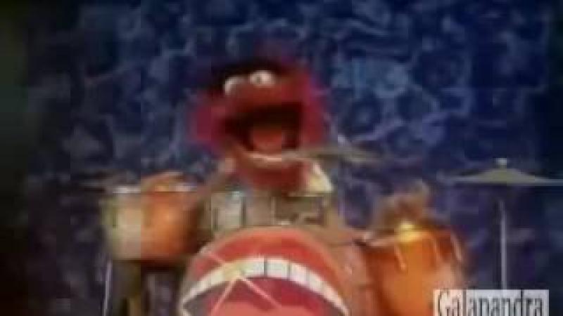 Animal Muppet Plays Drums And Sings Ultra Brutal Death Metal Grind