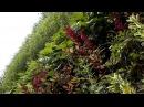 Вертикальное озеленение - бизнес идея
