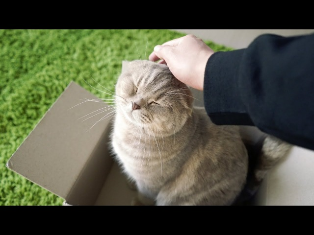 고양이가 자꾸 상자 속에서 폭풍애교를 부려요 feat 아기집사