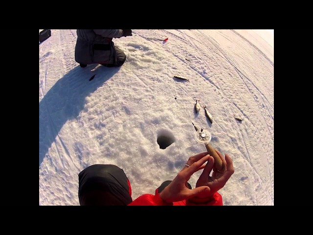 Зимняя ловля плотвы на чёртика Уловка