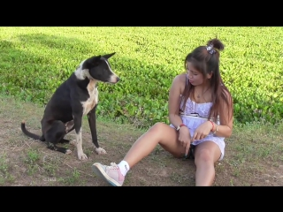 Lovely amazing girl playing with groups of baby cute dog - funny cute dog part 04