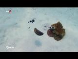 Quarks-Blauer_Planet_-_Wie_wir_die_Meere_retten_k