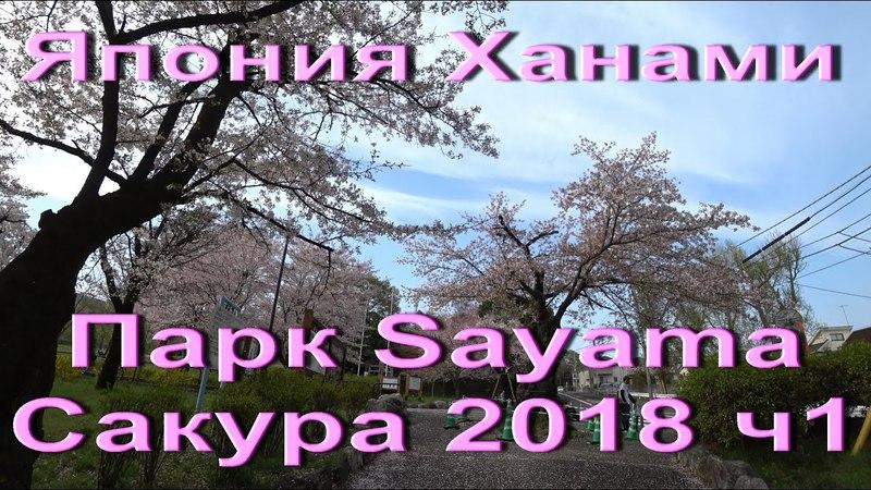 Япония Ханами 2018 Парк Sayama Пикники в парке. Как отдыхают японцы весной Hanami in japan ч.1