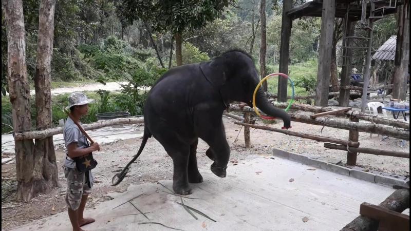 слон играет на дудке