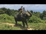 Катание на слонах. Медовый ?