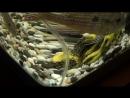 Мой восстановленный аквариум 17.1.18 Дмитриев Дмитрий