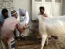 Борьба за Жизнь - Мясоеды без мяса