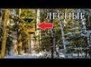 ОБУСТРАИВАЕМ ДОМ НА ДЕРЕВЕ | Окна с защитой, быстрые полки, очаг для огня | Майнкрафт в лесу | DIY