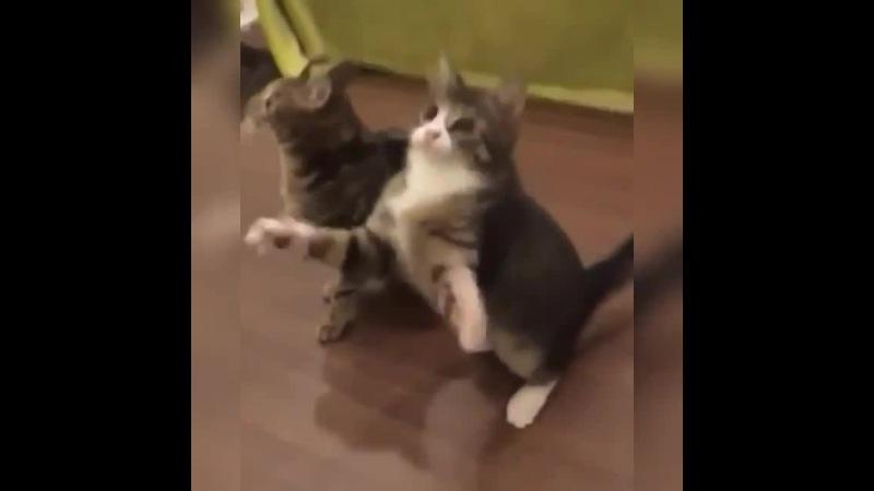 Eminem Cat · coub, коуб