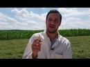 Как бороться с мухами и комарами на ферме
