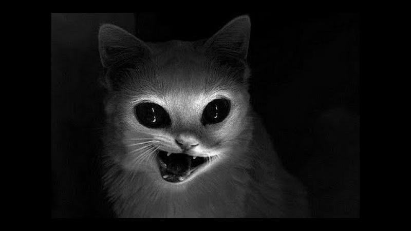 Адские Кошки и Коты