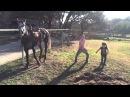 (0 ) Танец Лошадки