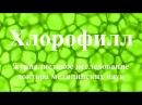 Научные исследования ХЛОРОФИЛЛА в онкологии и очищении организма от канцерогенов, плесени, паразитов